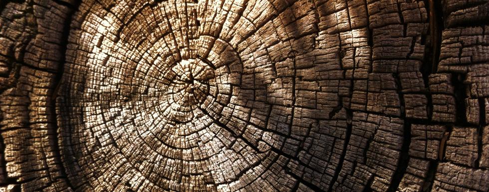 Pine Tree Rings 980x386